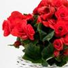 Plante cu flori pentru casa ta