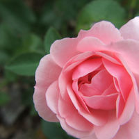 Felicitare Flori - 878