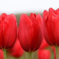 Felicitare Flori - 150