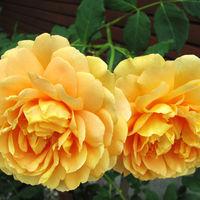 Felicitare Flori - 157