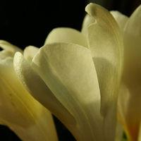 Felicitare Flori - 151