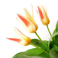 Felicitare Flori - 66