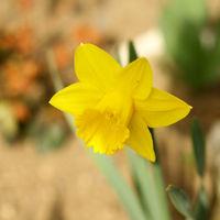 Felicitare Flori - 1058