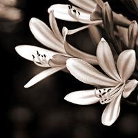 Felicitare Flori - 938