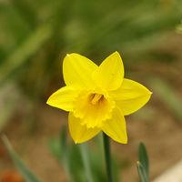 Felicitare Flori - 1059