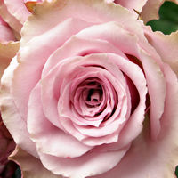 Felicitare Flori - 1091