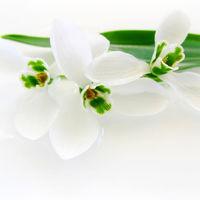 Felicitare Flori - 117