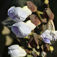 Felicitare Flori - 981