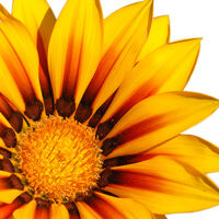 Felicitare Flori - 1099