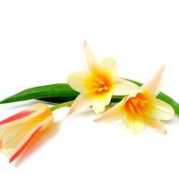 Felicitare Flori - 28