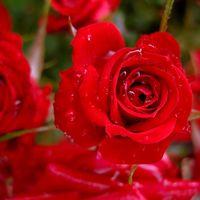 Felicitare Sf. Valentin - 1580