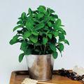 5 plante aromatice usor de cultivat