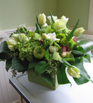 Flori adecvate designului interior
