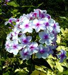 Ce flori alegem pentru gradina?