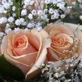Inmiresmatii trandafiri...