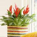 Vriesea, o planta ideala pentru apartament