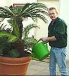 Ingrijirea plantelor naturale de interior in sezonul de vara