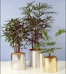 NASA si plantele naturale decorative