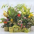 Umiditatea atmosferica si plantele