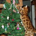 Un Craciun fericit alaturi de pisica