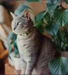 Protejeaza-ti pisica de plantele de apartament