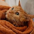 Cum ingrijim o pisica de apartament si o pisica de casa