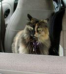 Cu pisica in masina