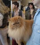 Si pisica se integreaza