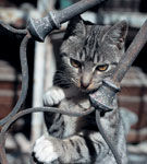De ce isi abandoneaza barbatii pisicile?