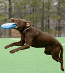Pe locuri, fiti gata... Frisbee!