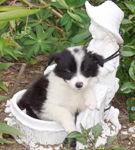 ABC-ul socializarii canine!