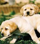 Puppy Test!