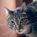 Hrana si stilul de viata al pisicilor de apartament