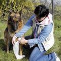 Urgentele veterinare - masuri de prim ajutor