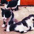 Coada pisicii, mai mult decat un element anatomic