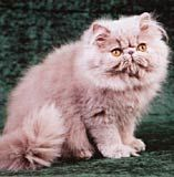 Cum sa ingrijim corect blana pisicii - Sfaturi de nota 10!