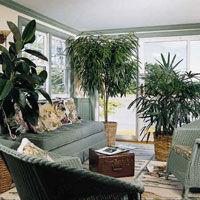 Natura in casa ta