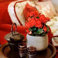 Plantele decorative cu flori - multa culoare in casa ta!