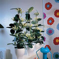 Plantele agatatoare de interior