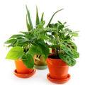 Cum alegi ghivecele pentru plantele tale?