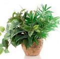 Parazitii plantelor de interior