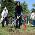 Gradina de legume a lui Michelle Obama
