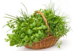Retete cu plante aromate