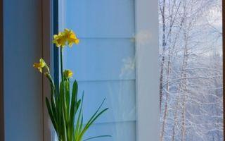 Ingrijirea plantelor pe timpul iernii