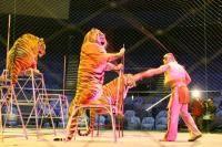 """""""Stop It! Fara animale salbatice in circuri!""""..."""