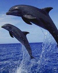 Delfinii ne dau lectii despre diabet