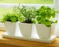Plante usor de crescut, chiar si in bucataria ta