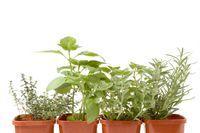 Rosii, ardei si salata in balcon