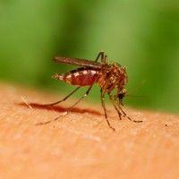 Virusul West Nile: simptome şi măsuri de protecţie