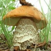 Care sunt simptomele intoxicaţiei cu ciuperci?